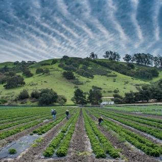 The Santa Barbara Foundation: LEAFInitiative