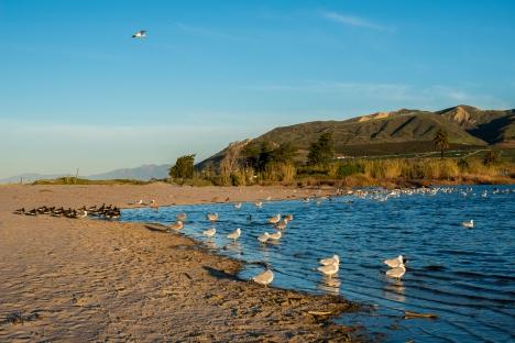 150214-8118 Ventura River mouth