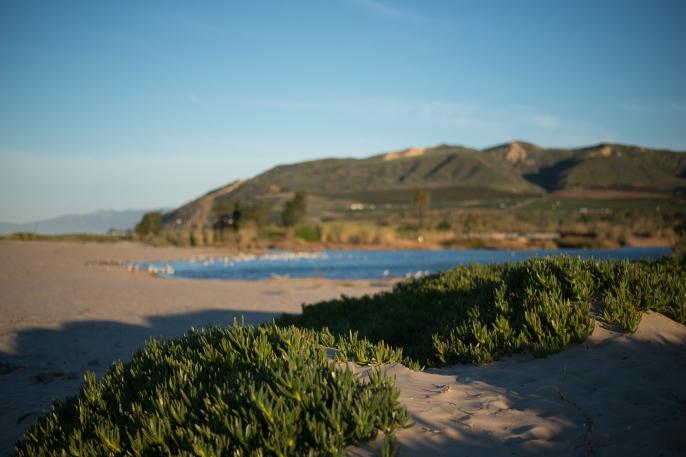 150214-8150 Ventura River Dunes