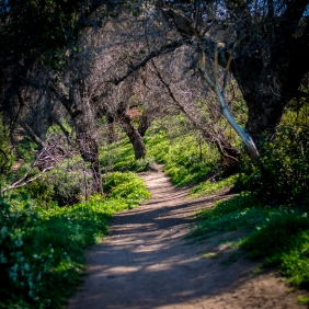 150202-7360 SantaMonica Mountains Rec area Satwiwa loop
