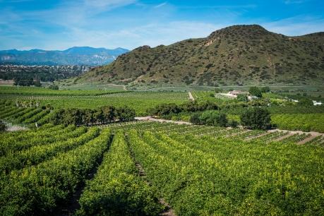 150202-7408 Camarillo Springs common, Camarillo springs Rd