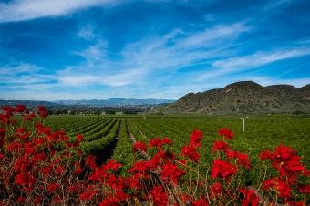 150202-7458 Camarillo Springs common, Camarillo springs Rd