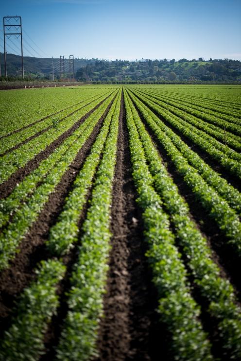 150202-7491 Farmland on 118, Moorpark city limit