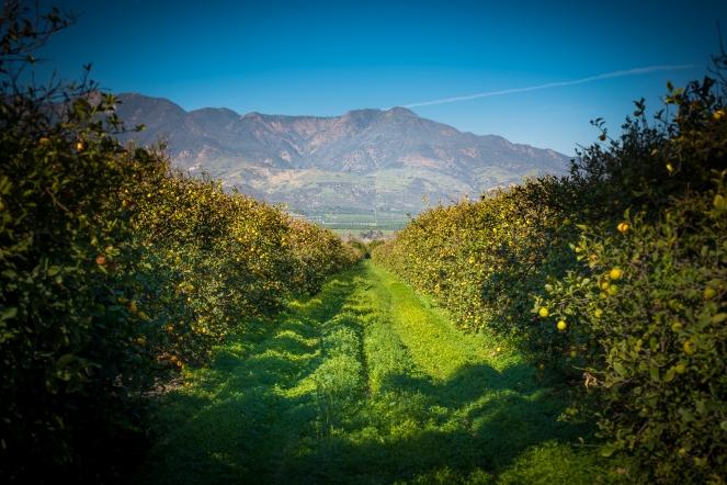 150205-7730 Citrus S. Mountain Rd